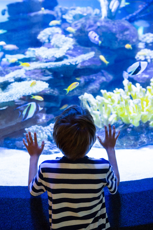fishtank: Young man touching a fish-tank behind camera at the aquarium