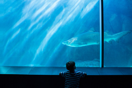 lonesomeness: Young man looking at a shark in a tank at the aquarium