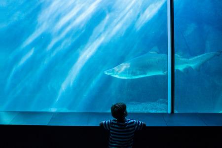 solitariness: Young man looking at a shark in a tank at the aquarium