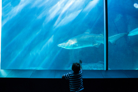 isolation tank: Young man pointing a shark with his hand at the aquarium Stock Photo