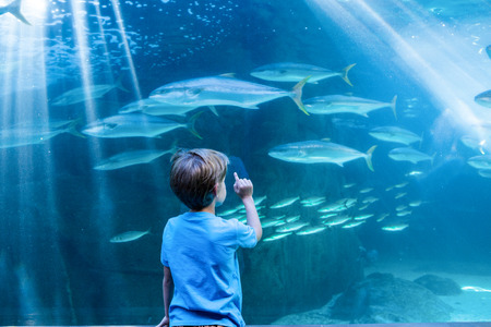 inquiring: Young man pointing fish in a tank with his finger at the aquarium