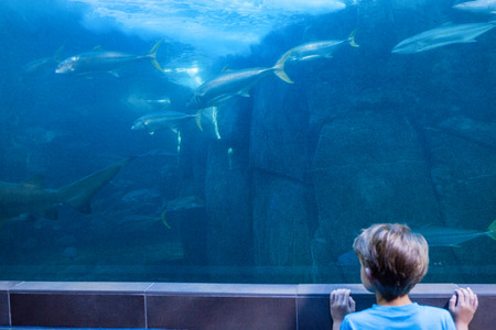 fishtank: Young man looking at fish swimming at the aquarium