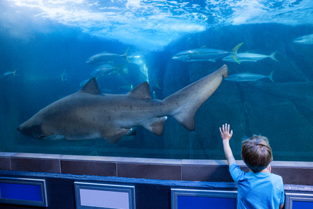 fishtank: Young man touching a tank with fish and shark at the aquarium Stock Photo