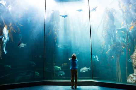 fishtank: Young man looking at penguins in a tank at the aquarium