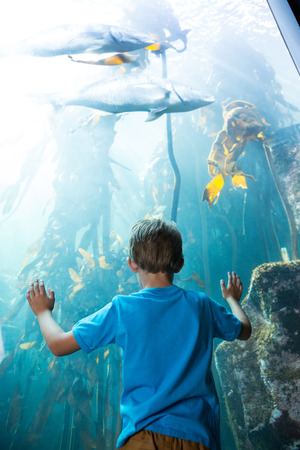 fishtank: Young man touching a illuminate fish-tank behind the camera at the aquarium