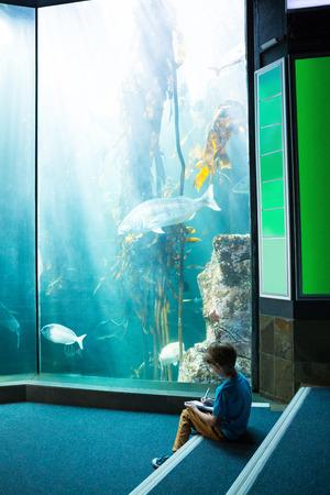 inquiring: Young man drawing a fish in a illuminate tank at the aquarium