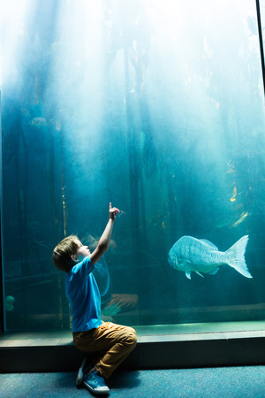 fishtank: Young man pointing the top of a tank at the aquarium