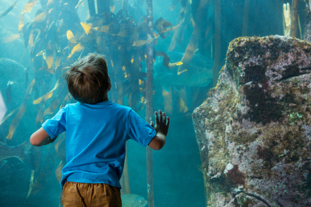 fishtank: Young man touching a tank with algae behind the camera at the aquarium