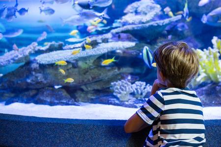 pez pecera: Joven sentado en frente de una pecera en el acuario Foto de archivo