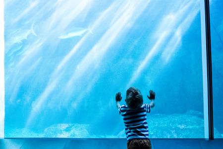 fishtank: Young man touching a giant fish-tank at the aquarium