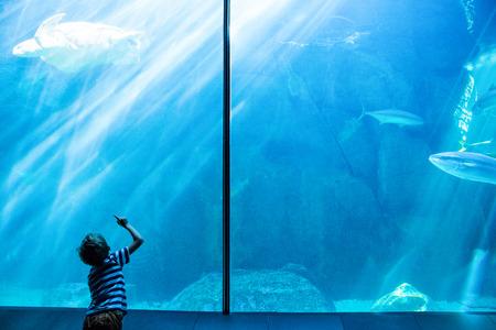 schildkr�te: Junger Mann, der einen Meeresschildkr�teschwimmen im Aquarium
