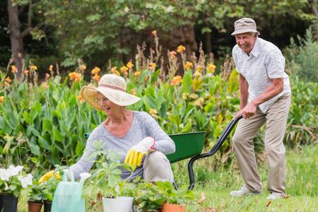 Gelukkige grootmoeder en grootvader tuinieren op een zonnige dag Stockfoto
