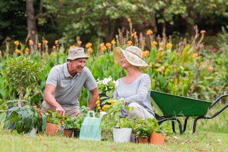 abuelos: Abuela feliz y la jardinería abuelo en un día soleado