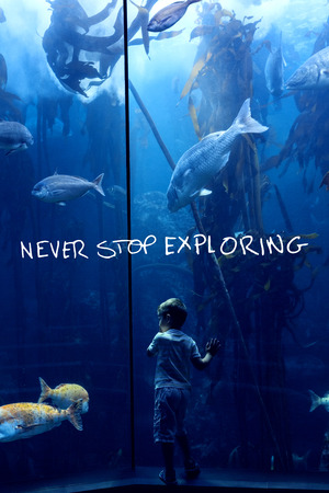 fish tank: never stop exploring against little boy looking at fish tank