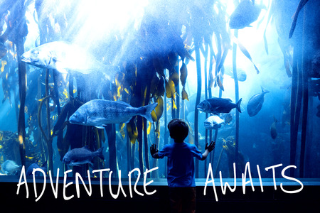 fishtank: adventure awaits against young man touching a tank with big fish