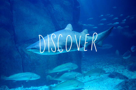 fishtank: discover against shark swimming in fish tank Stock Photo
