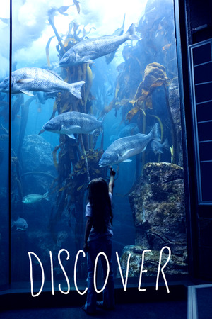 discover: discover against little girl looking at fish tank
