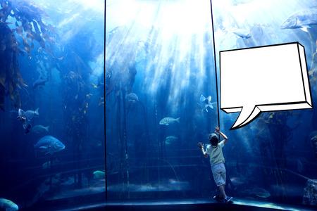 fish tank: Speech bubble against little boy looking at fish tank