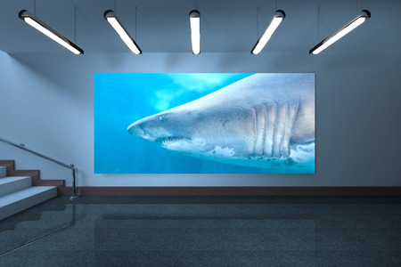fishtank: Room with display against shark swimming in fish tank