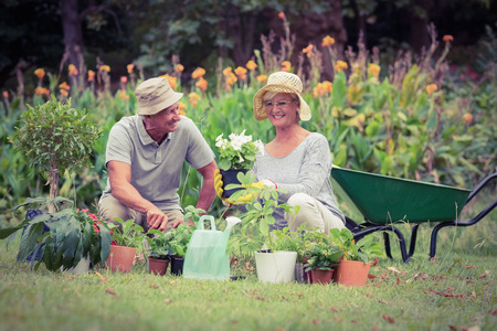 elderly: Happy grandmother and grandfather gardening on a sunny day