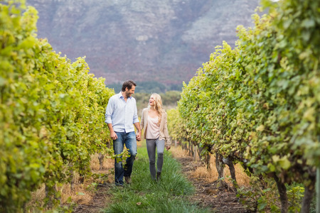 holding hands while walking: Young happy couple walking next to each other while holding hands in the grape fields