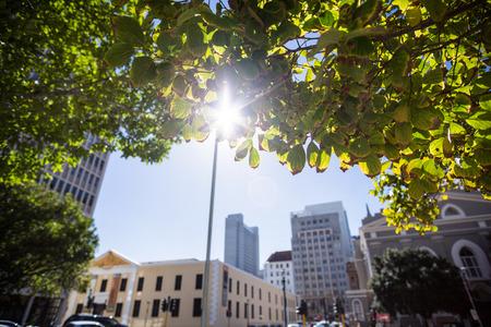 framed: Sun shining over a city framed by green leaves