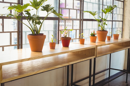 flowerpots: Close up view of flowerpots in a line on a wooden table