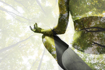 luz natural: Ajustar la mujer sentada en posición de loto frente a vista de ángulo bajo de los árboles altos