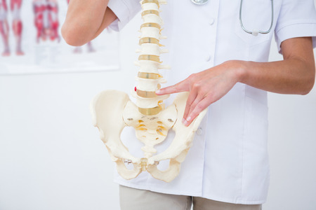 anatomical model: Doctor showing anatomical spine in clinic