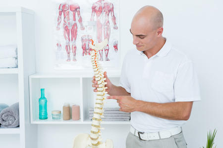 anatomical: Doctor holding an anatomical spine in medical office