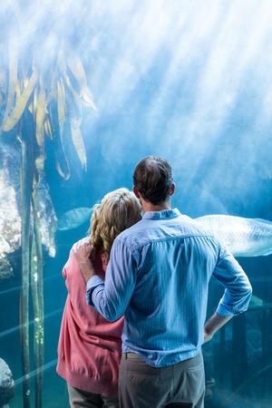 水族館で水槽の魚を見ていくつかのビューを着用します。 写真素材