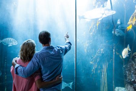 fishtank: Couple looking at fish in tank at the aquarium