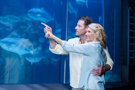 fish tank: Happy couple pointing a fish tank at the aquarium