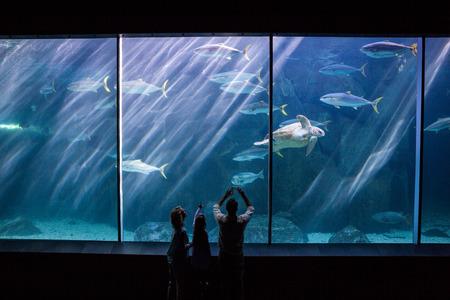 fishtank: Happy family looking at the fish tank at the aquarium
