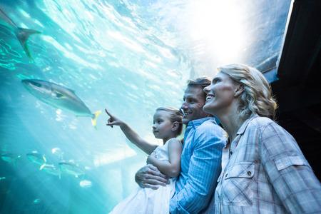 fishtank: Familly looking at fish tank at the aquarium