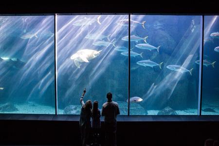 fish tank: Familia feliz mirando la pecera en el acuario
