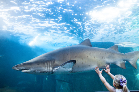 fishtank: Young woman touching a shark tank at the aquarium