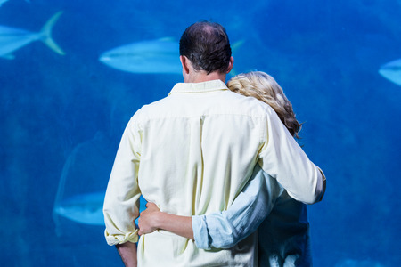 tank fish: Rear view of couple watching the tank fish at the aquarium