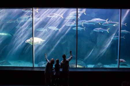 aquarium: Happy family looking at the fish tank at the aquarium