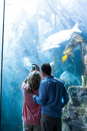 fishtank: Wear view of a couple taking photo of fish at the aquarium