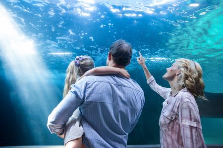 fish tank: Familly looking at fish tank at the aquarium