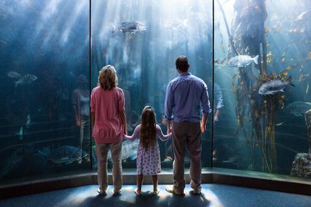 fish tank: Family looking  at fish tank at the aquarium Stock Photo