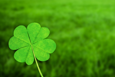 four: four leaf clover against grass