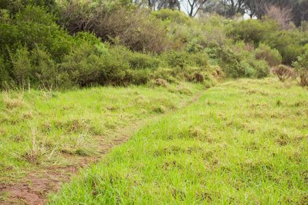 greenness: Image of a beautiful greenness hiking path