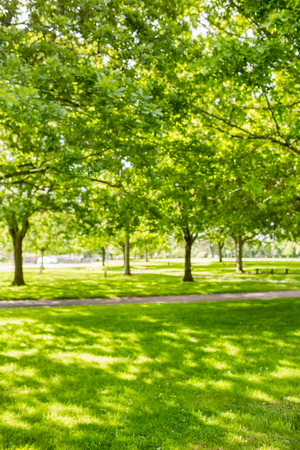 green park: Green park with sun shining on a sunny day Stock Photo