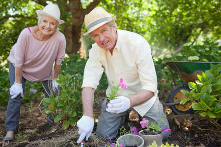 70s adult: Man holding a pink flower and a silver spade smiling with a friend while gardening