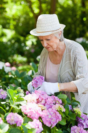 people: Woman looking at pink flowers as she prunes in a garden