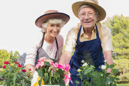 80s adult: Elderly couple wearing straw hats gardening together