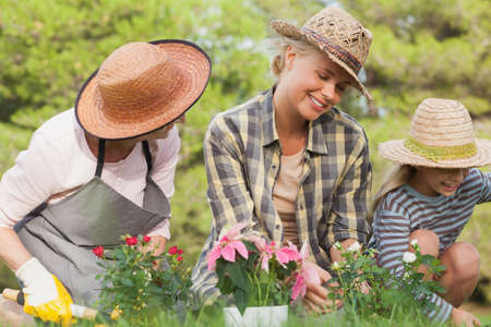three generations of women: Three generations of women gardening together with potted plants LANG_EVOIMAGES