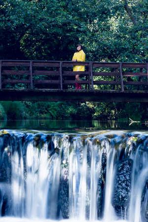 lush foliage: Woman standing on footbridge over forest waterfall amid lush foliage